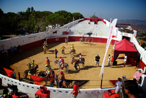 Donkey Polo in Mijas | A frenetic team building