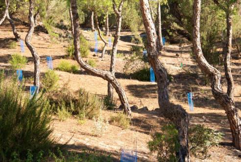 reforestacion-huelva-evento-sostenible-rsc-exploramas-4