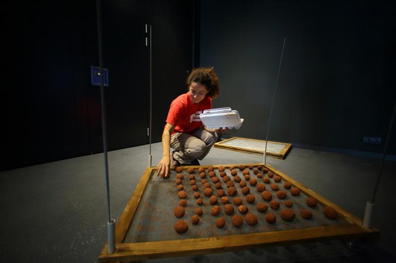 team building barcelona reforestacion indoor evento rsc exploramas