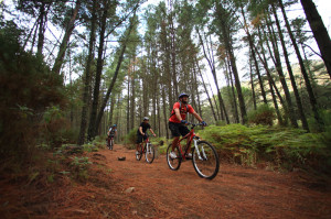 rutas-en-mountain-bike-aventuras-empresas-exploramas-5