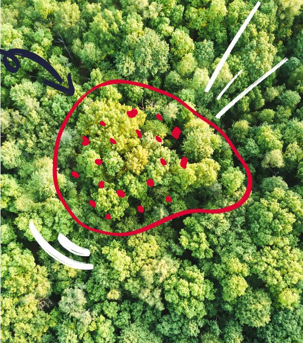 Reforestación virtual
